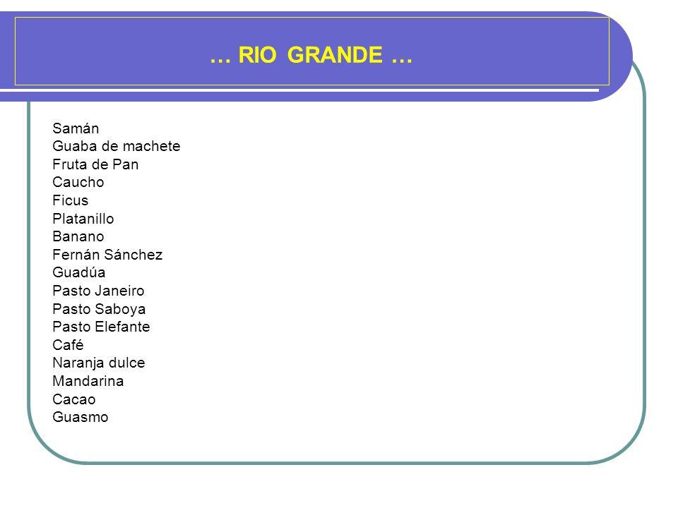 … RIO GRANDE … Samán Guaba de machete Fruta de Pan Caucho Ficus