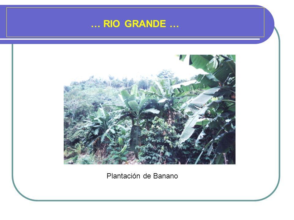 … RIO GRANDE … Plantación de Banano
