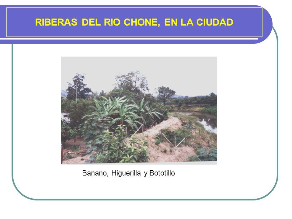 RIBERAS DEL RIO CHONE, EN LA CIUDAD