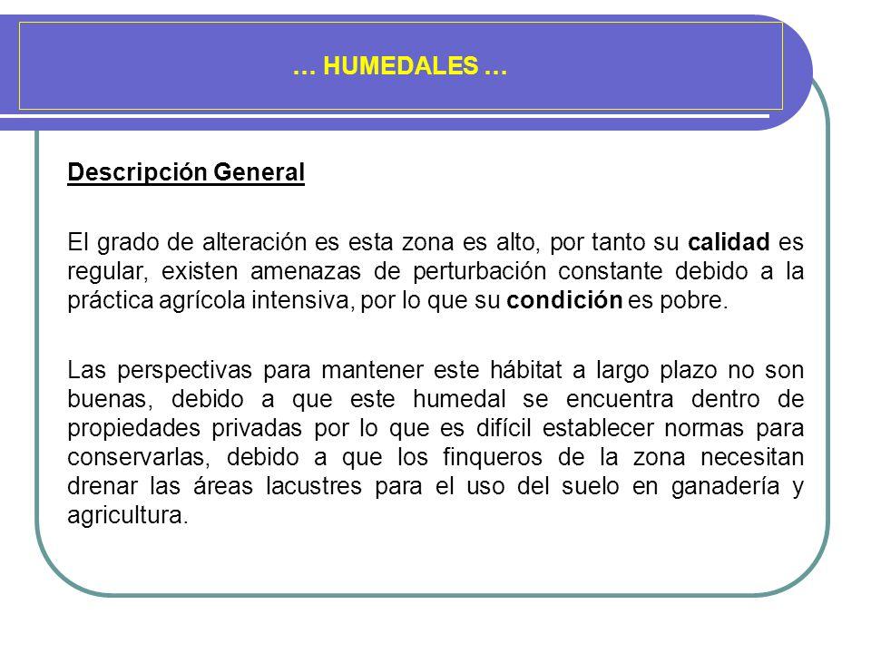 … HUMEDALES … Descripción General.