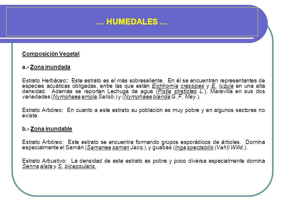 … HUMEDALES … Composición Vegetal a.- Zona inundada