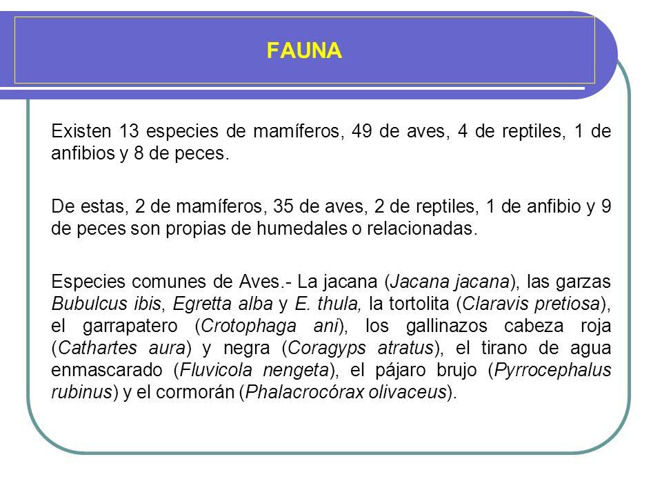 FAUNAExisten 13 especies de mamíferos, 49 de aves, 4 de reptiles, 1 de anfibios y 8 de peces.