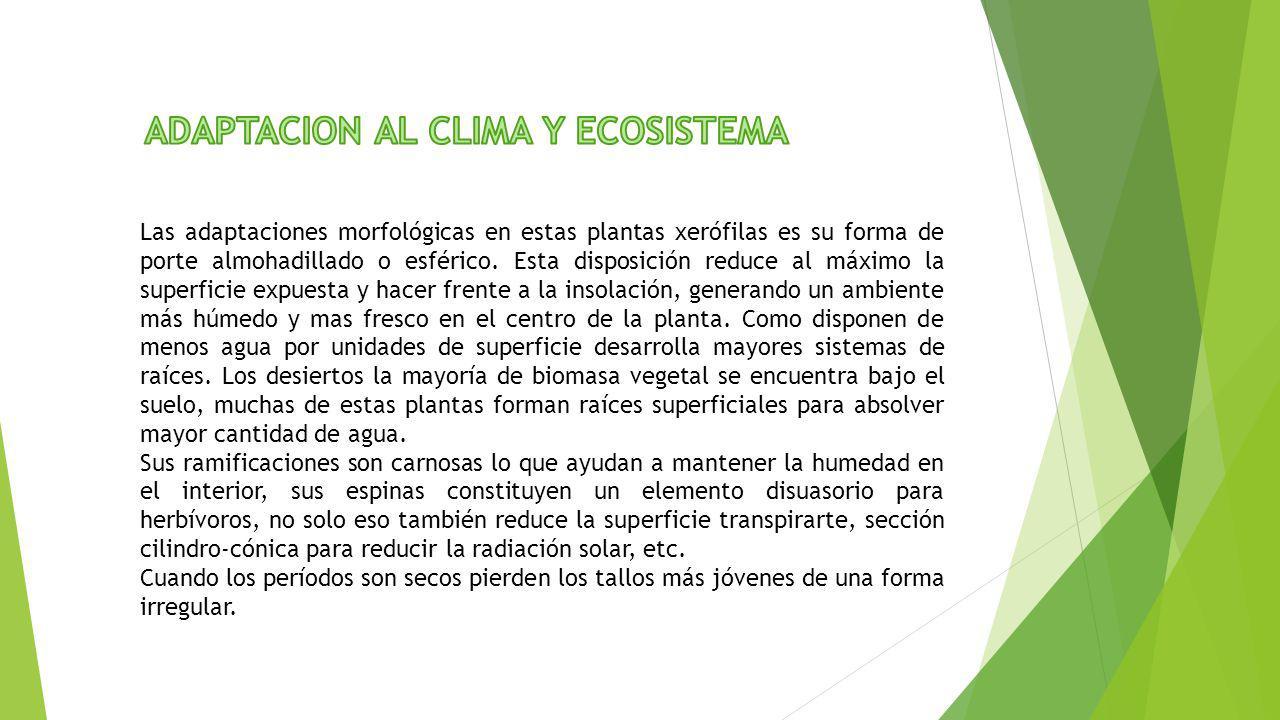 ADAPTACION AL CLIMA Y ECOSISTEMA