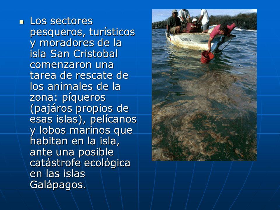 Los sectores pesqueros, turísticos y moradores de la isla San Cristobal comenzaron una tarea de rescate de los animales de la zona: píqueros (pajáros propios de esas islas), pelícanos y lobos marinos que habitan en la isla, ante una posible catástrofe ecológica en las islas Galápagos.