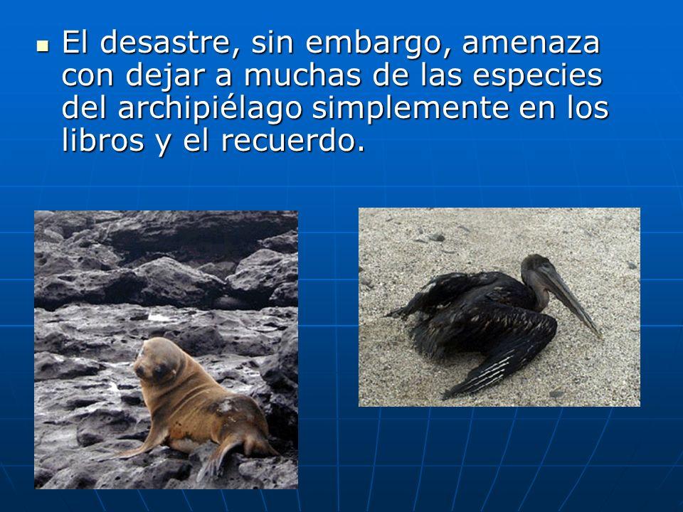 El desastre, sin embargo, amenaza con dejar a muchas de las especies del archipiélago simplemente en los libros y el recuerdo.