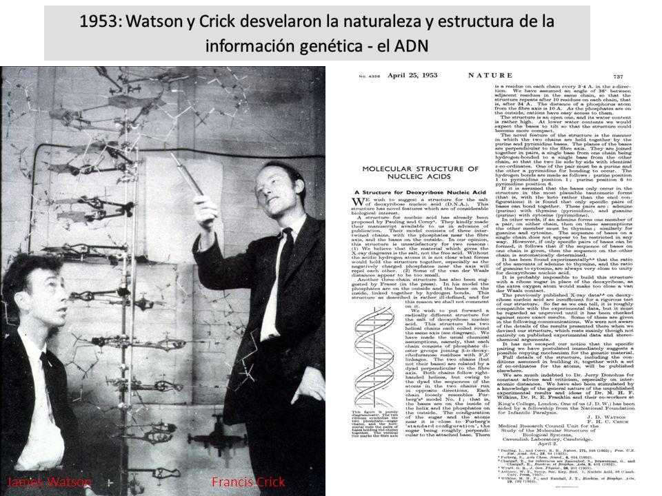 1953: Watson y Crick desvelaron la naturaleza y estructura de la información genética - el ADN