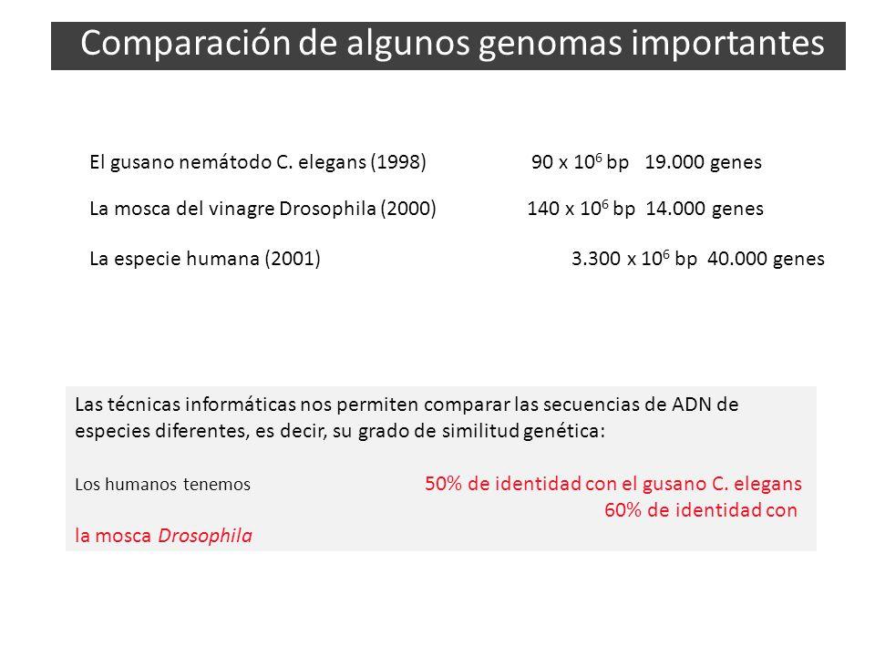 Comparación de algunos genomas importantes