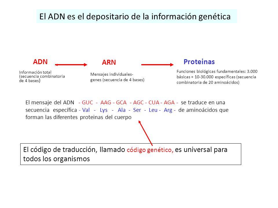 El ADN es el depositario de la información genética