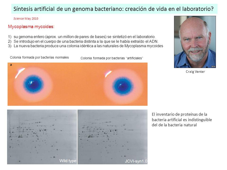Síntesis artificial de un genoma bacteriano: creación de vida en el laboratorio