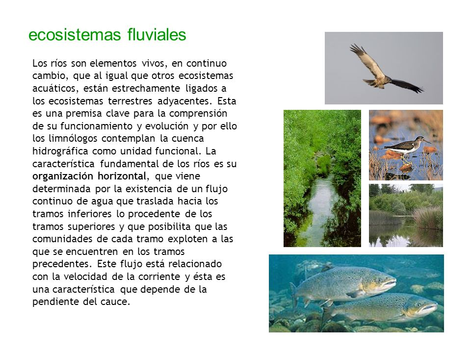 ecosistemas fluviales