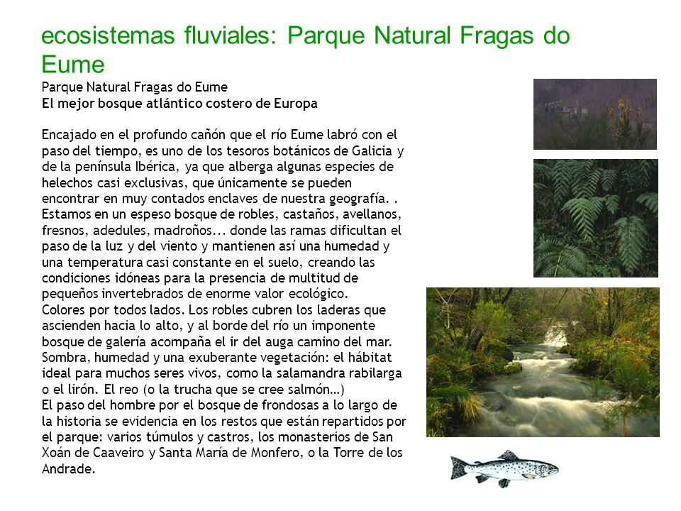 ecosistemas fluviales: Parque Natural Fragas do Eume