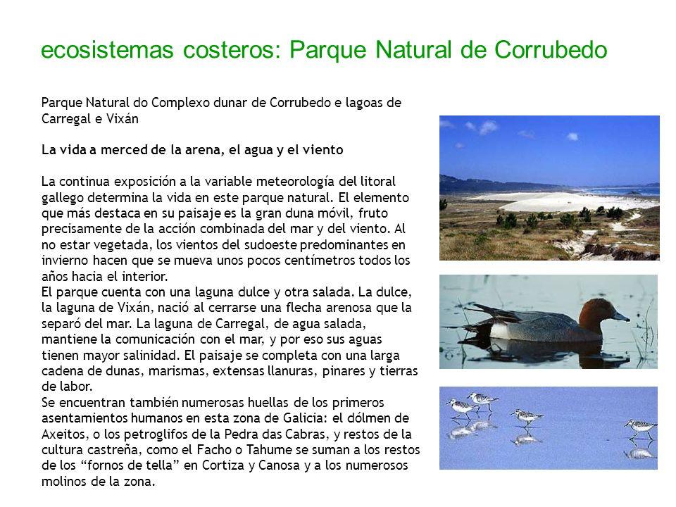 ecosistemas costeros: Parque Natural de Corrubedo