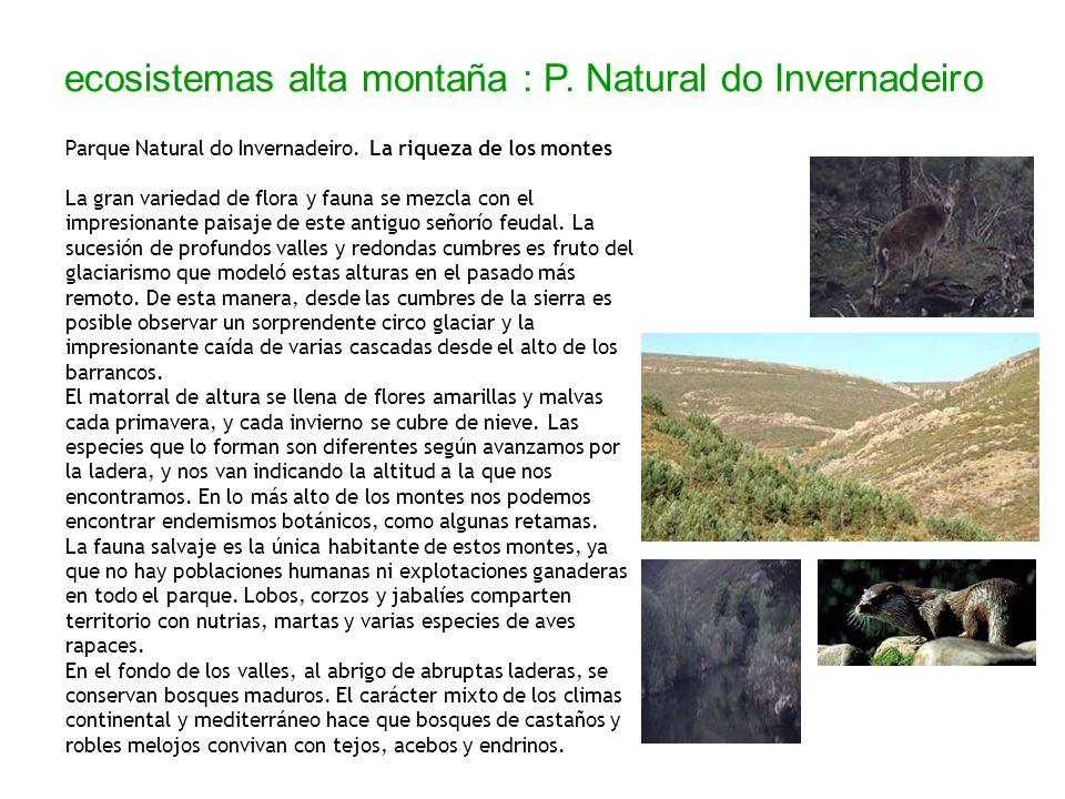 ecosistemas alta montaña : P. Natural do Invernadeiro