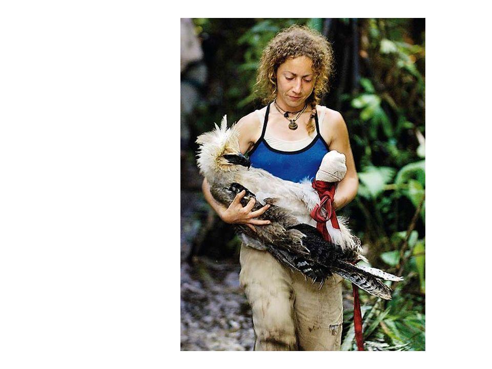 http://www.elpais.com/fotografia/Ruth/Muniz/rescata/aguila/harpia/herida/elpdiasoc/20080316elpepspor_3/Ies/