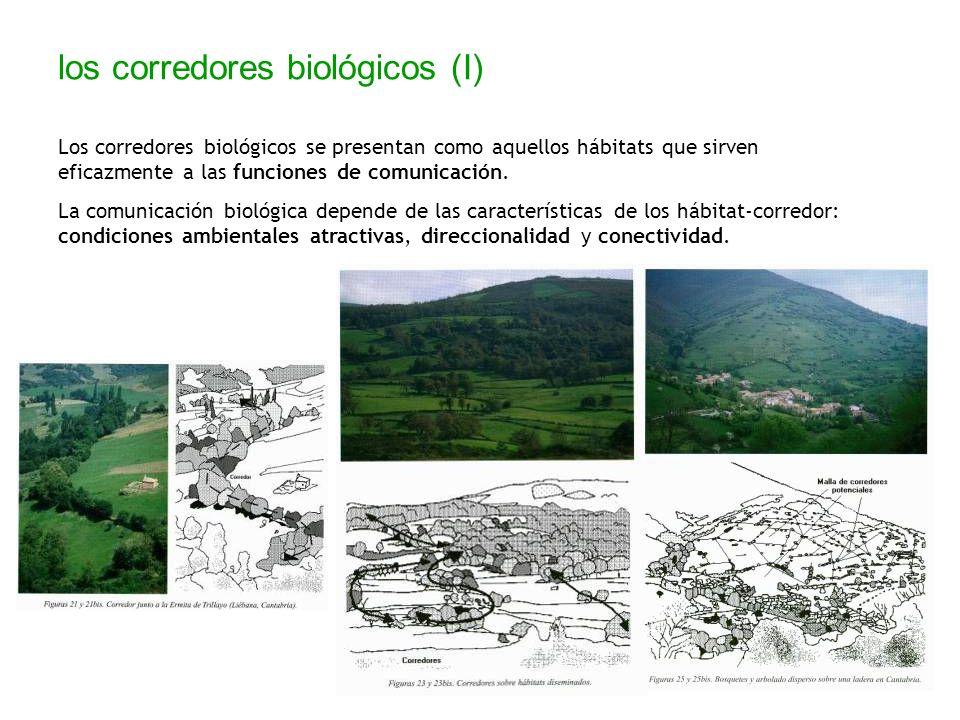los corredores biológicos (I)