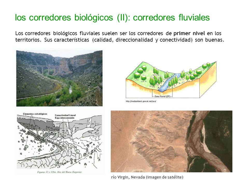 los corredores biológicos (II): corredores fluviales
