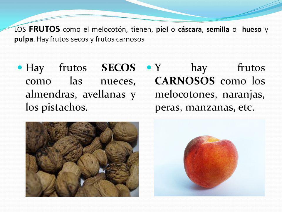 LOS FRUTOS como el melocotón, tienen, piel o cáscara, semilla o hueso y pulpa. Hay frutos secos y frutos carnosos