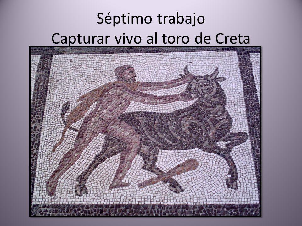 Séptimo trabajo Capturar vivo al toro de Creta