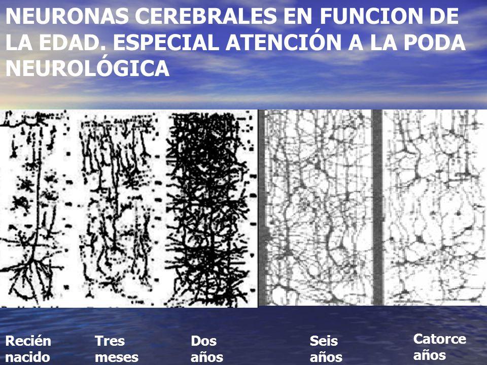 NEURONAS CEREBRALES EN FUNCION DE LA EDAD