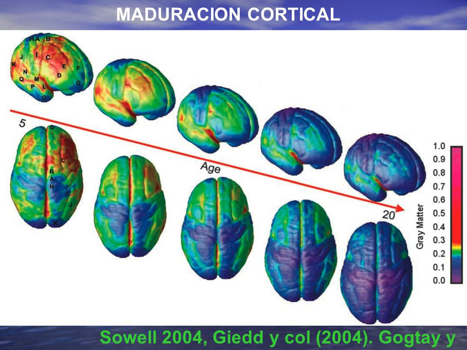 Sowell 2004, Giedd y col (2004). Gogtay y col (2004)