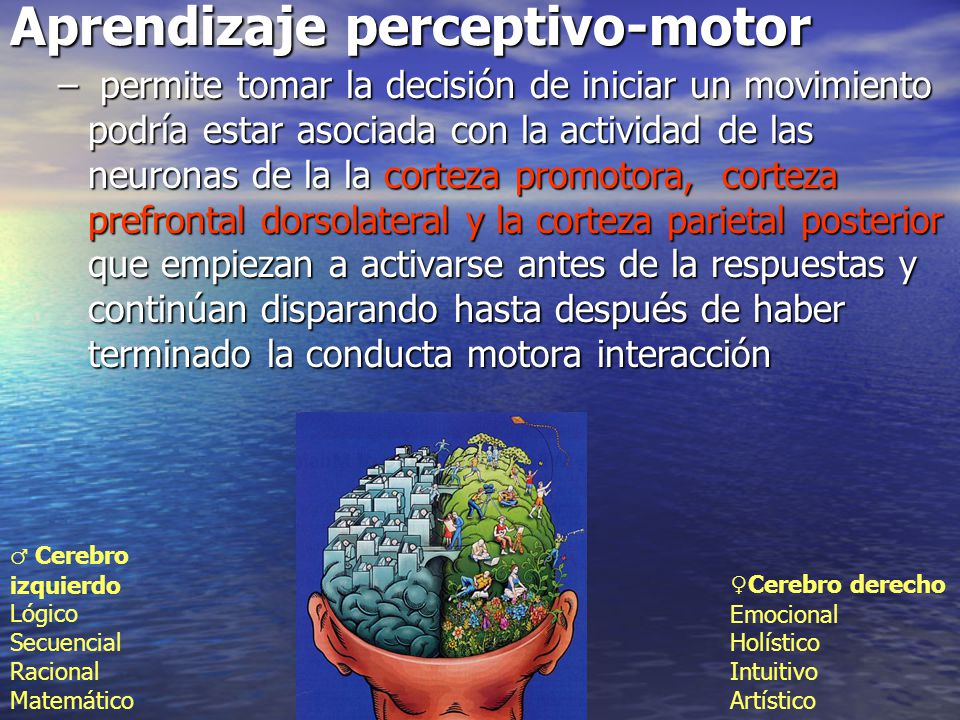 Aprendizaje perceptivo-motor