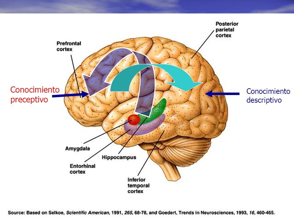 Conocimiento preceptivo Conocimiento descriptivo