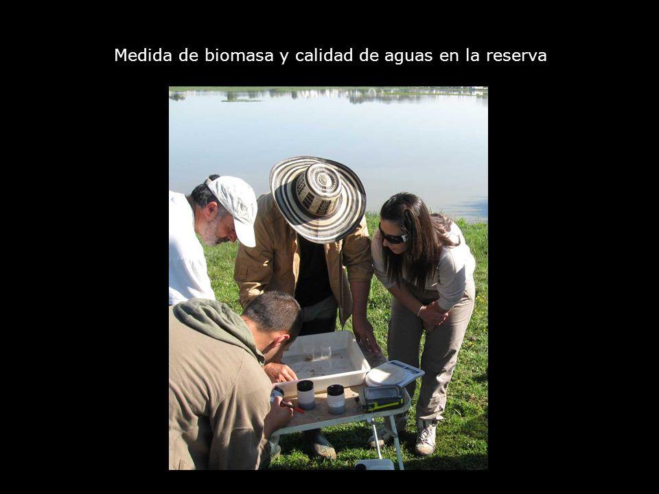 Medida de biomasa y calidad de aguas en la reserva
