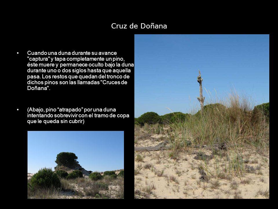 Cruz de Doñana