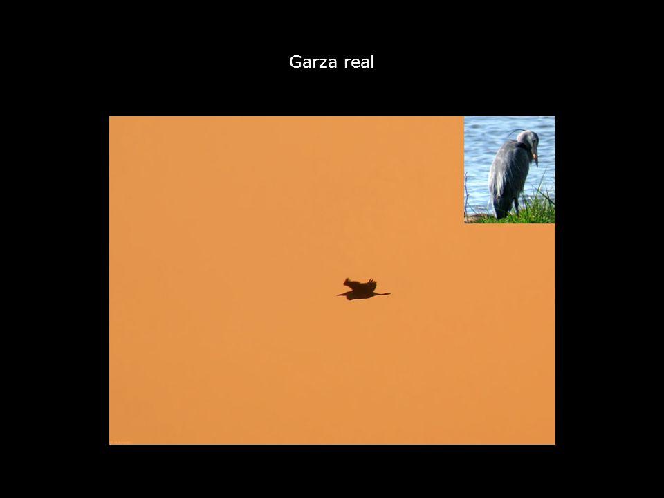 Garza real