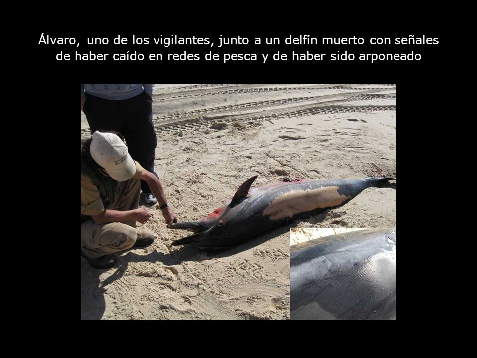 Álvaro, uno de los vigilantes, junto a un delfín muerto con señales de haber caído en redes de pesca y de haber sido arponeado