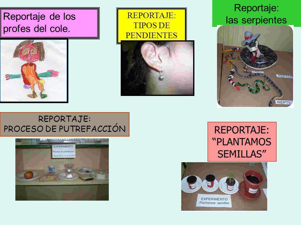 Reportaje: las serpientes Reportaje de los profes del cole.