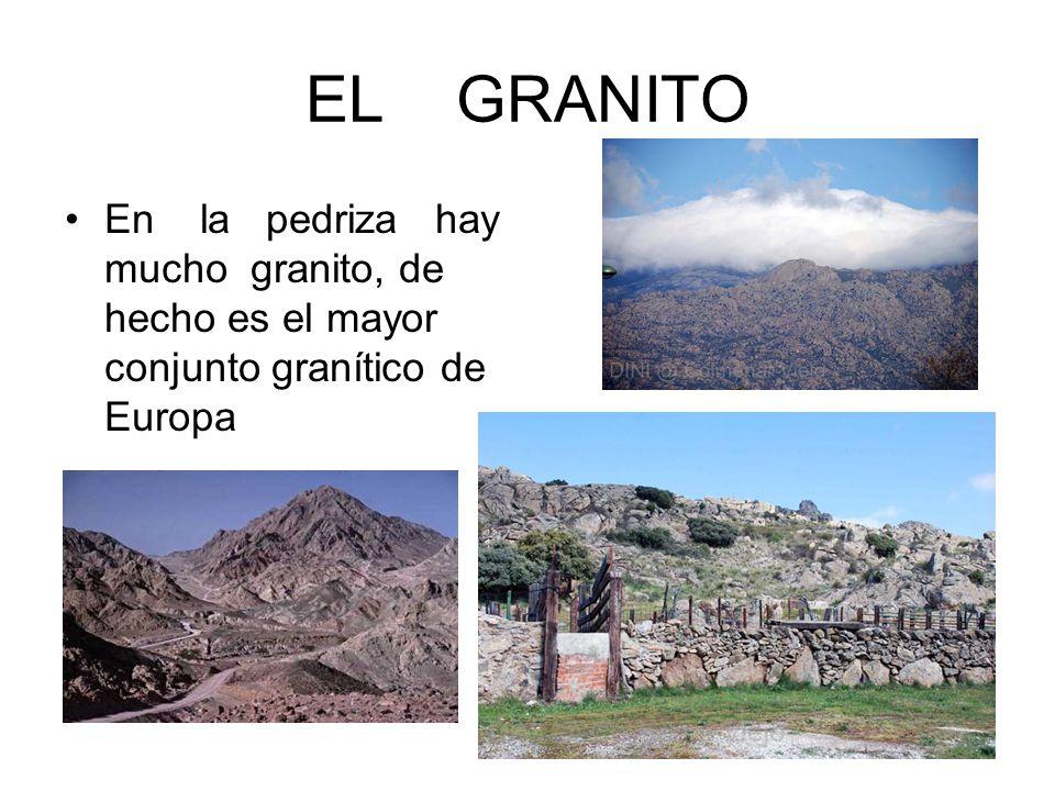 EL GRANITO En la pedriza hay mucho granito, de hecho es el mayor conjunto granítico de Europa.