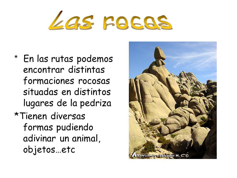 Las rocas * En las rutas podemos encontrar distintas formaciones rocosas situadas en distintos lugares de la pedriza.