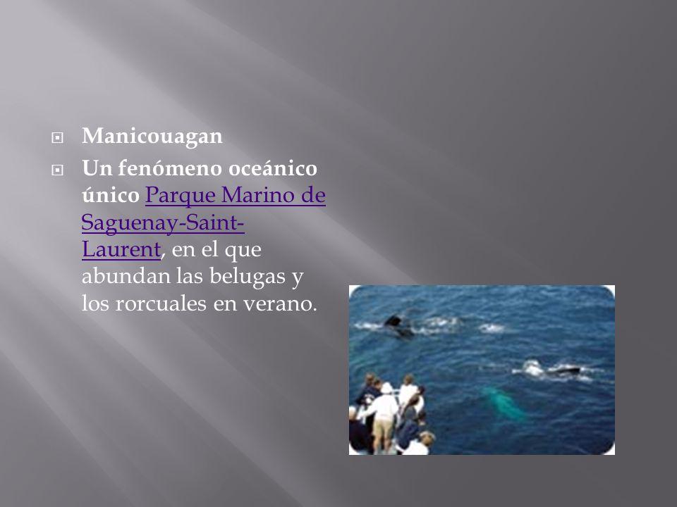 ManicouaganUn fenómeno oceánico único Parque Marino de Saguenay-Saint-Laurent, en el que abundan las belugas y los rorcuales en verano.