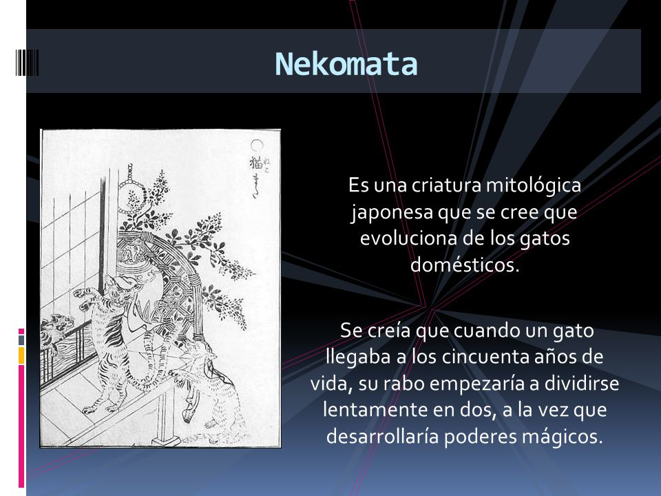 Nekomata Es una criatura mitológica japonesa que se cree que evoluciona de los gatos domésticos.