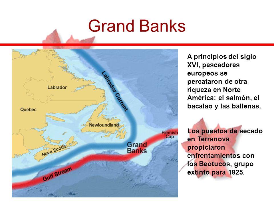 Grand Banks A principios del siglo XVI, pescadores europeos se percataron de otra riqueza en Norte América: el salmón, el bacalao y las ballenas.