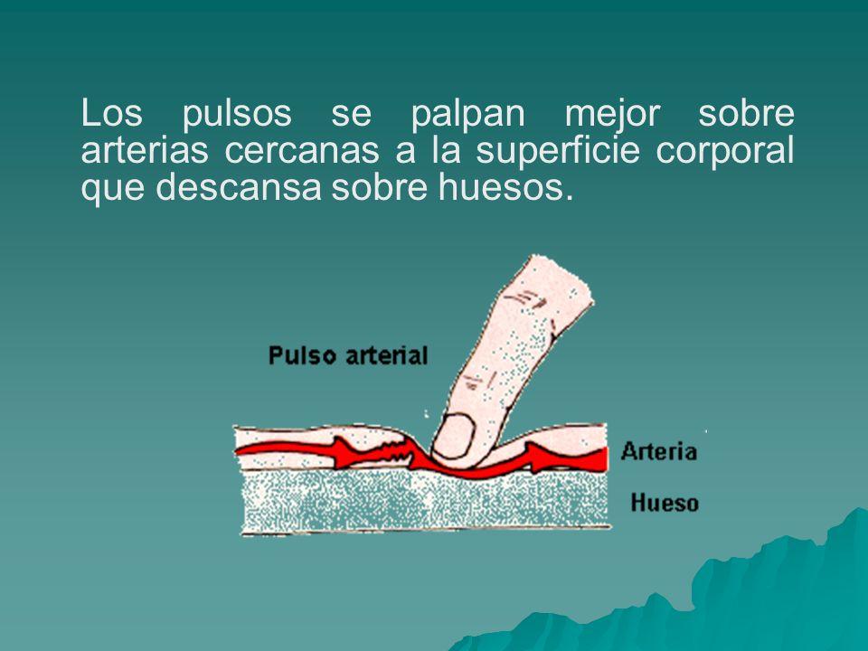 Los pulsos se palpan mejor sobre arterias cercanas a la superficie corporal que descansa sobre huesos.