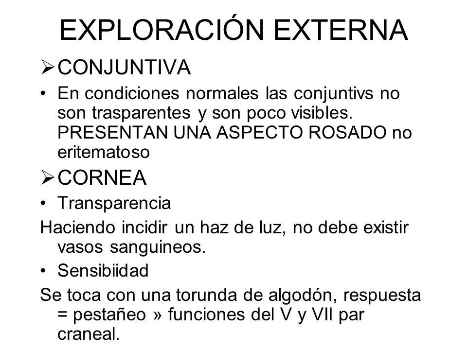 EXPLORACIÓN EXTERNA CONJUNTIVA CORNEA