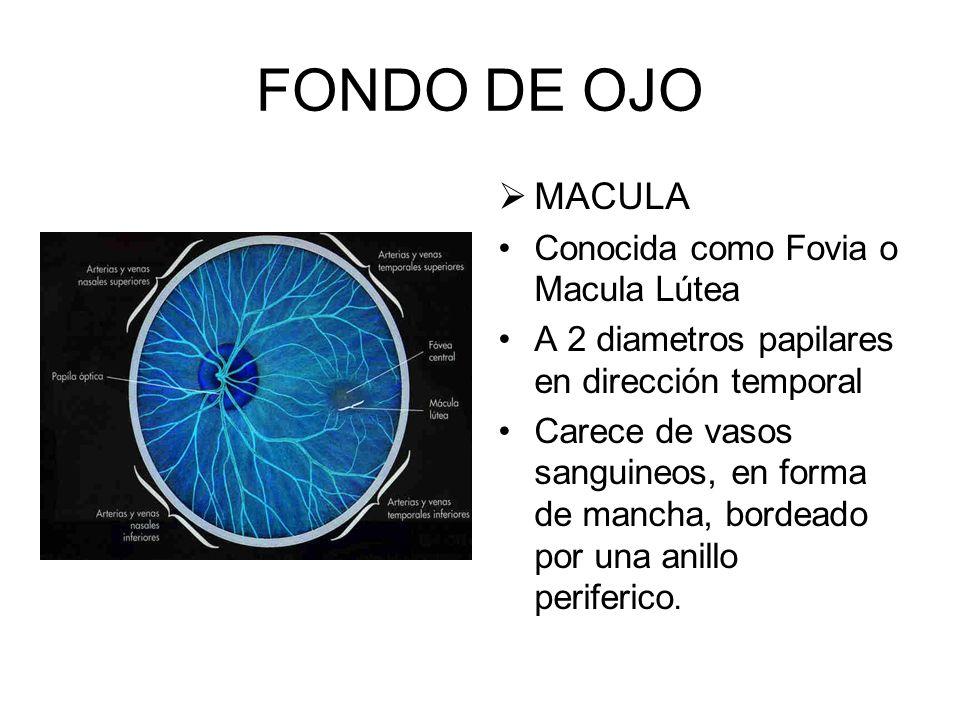 FONDO DE OJO MACULA Conocida como Fovia o Macula Lútea