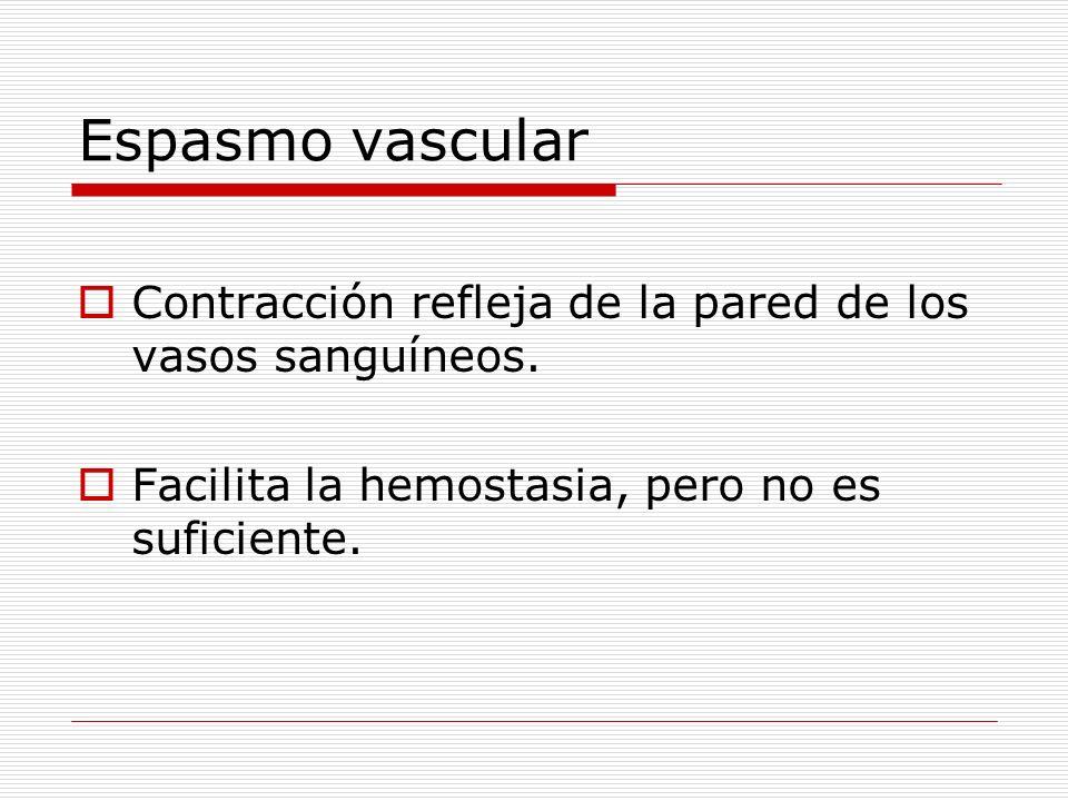 Espasmo vascular Contracción refleja de la pared de los vasos sanguíneos.