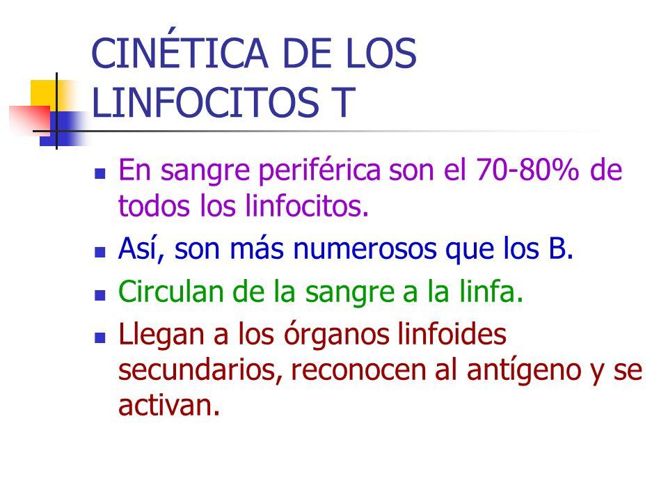 CINÉTICA DE LOS LINFOCITOS T