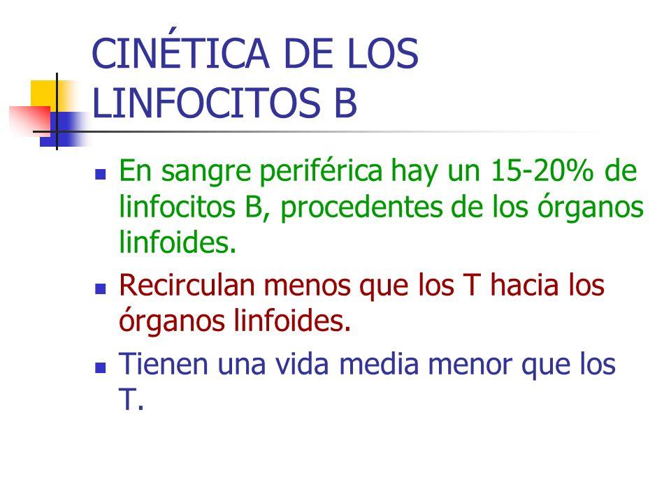 CINÉTICA DE LOS LINFOCITOS B