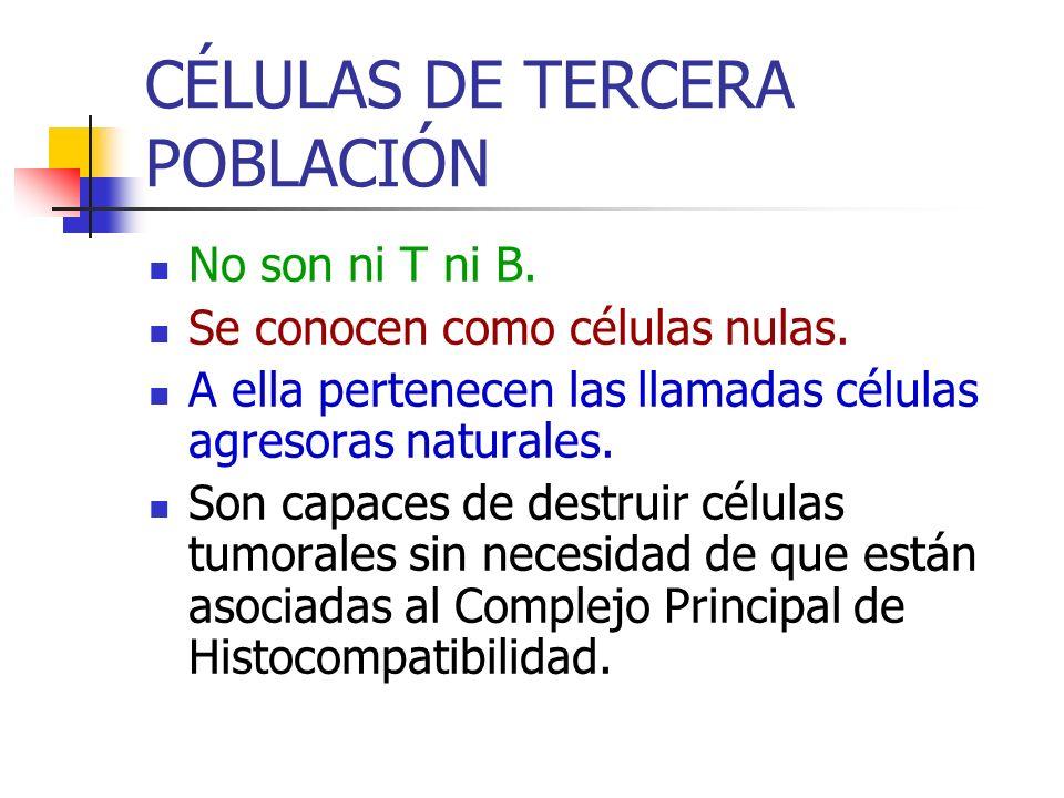 CÉLULAS DE TERCERA POBLACIÓN
