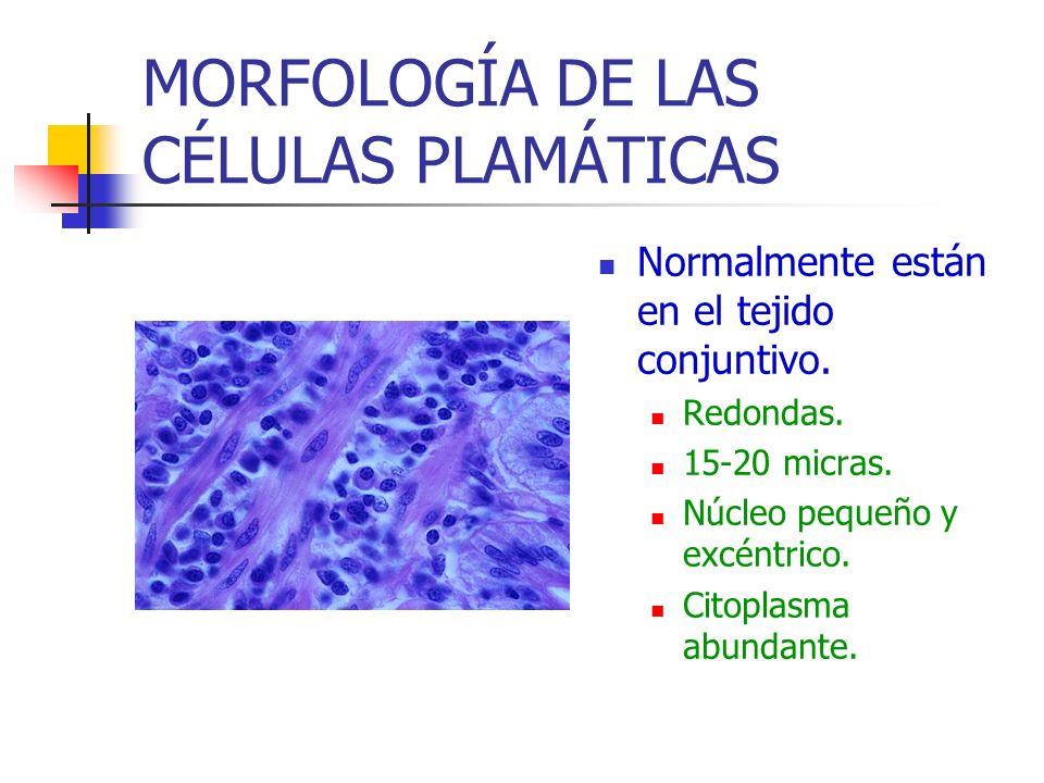 MORFOLOGÍA DE LAS CÉLULAS PLAMÁTICAS