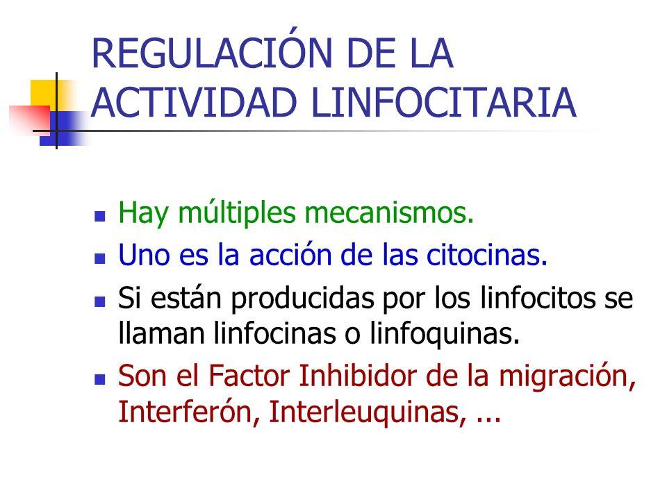 REGULACIÓN DE LA ACTIVIDAD LINFOCITARIA