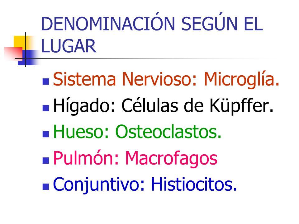 DENOMINACIÓN SEGÚN EL LUGAR