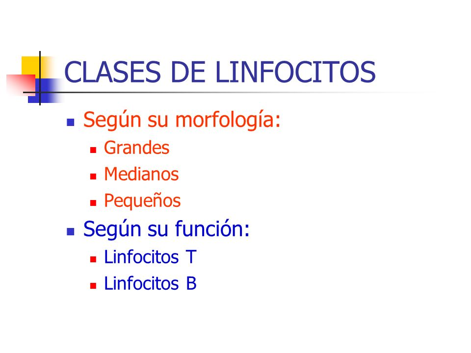 CLASES DE LINFOCITOS Según su morfología: Según su función: Grandes