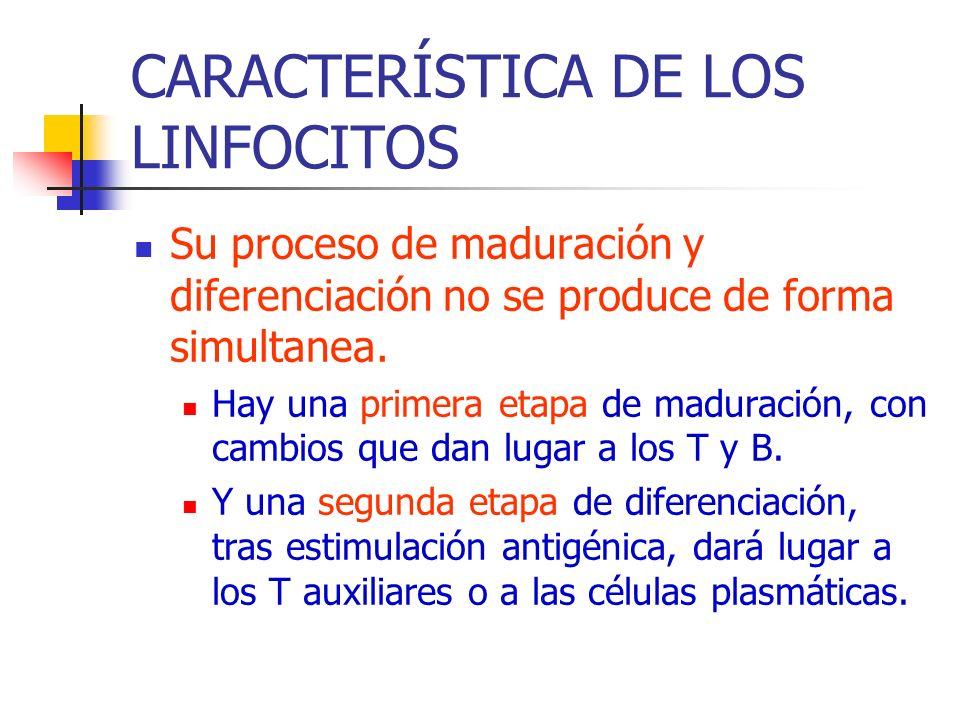 CARACTERÍSTICA DE LOS LINFOCITOS