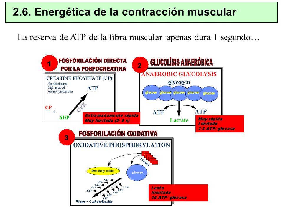 2.6. Energética de la contracción muscular