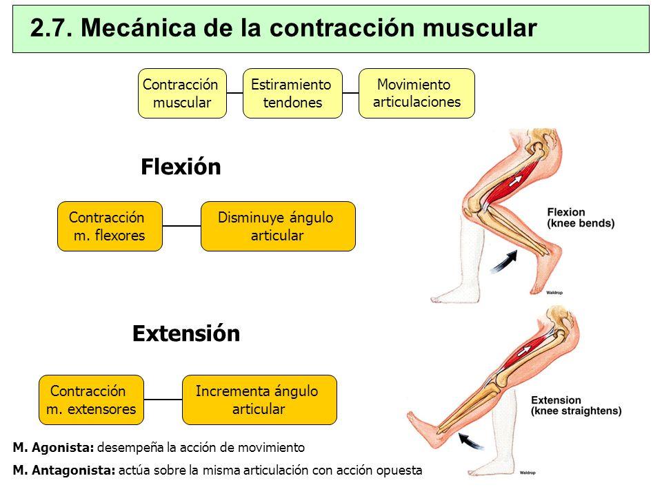 2.7. Mecánica de la contracción muscular